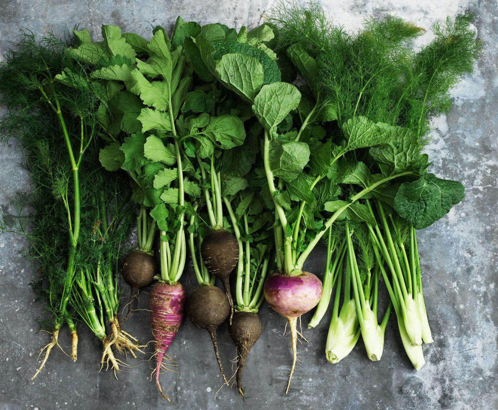 Rodfrugter, dild, radisser, rødbeder og fennikel